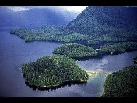 Nat Geo Wild The Great Bear Rainforest Nature Documentary