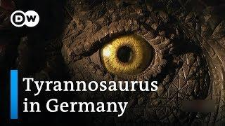The dinosaur village | DW Documentary
